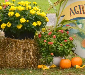 flowers and vegetables as decoration in Western New York