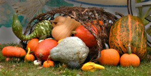 pumpkins and gourds as decoration in Western New York