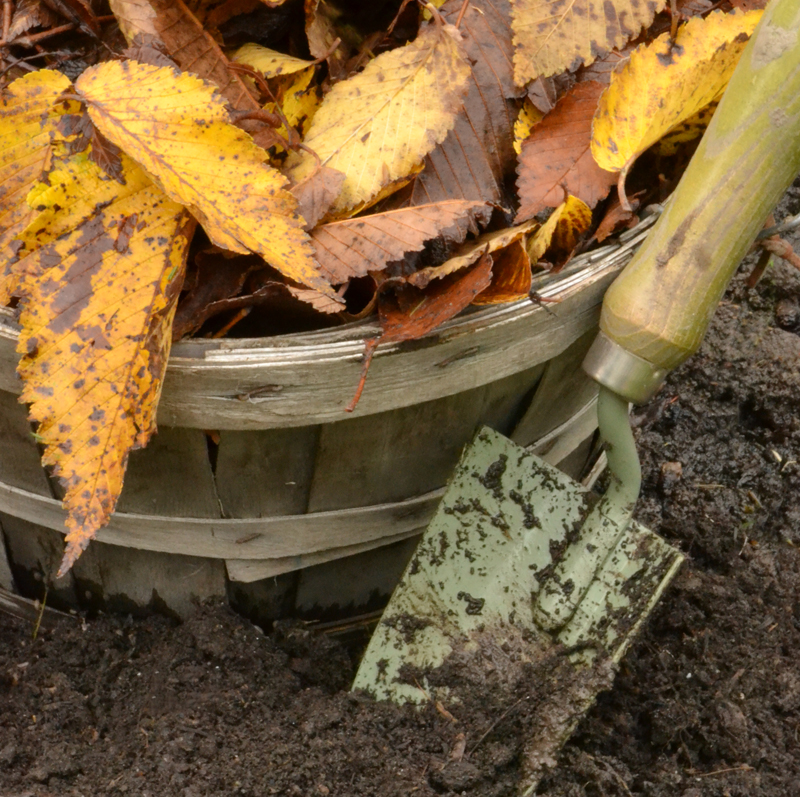 trowel in garden compost with bushel basket of autumn leaves in Western New York