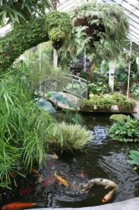 Buffalo and Erie County Botanical Gardens Greenhouse 2b