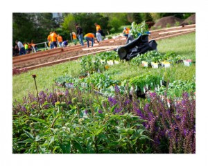 garden from Fiskars Project Orange Thumb