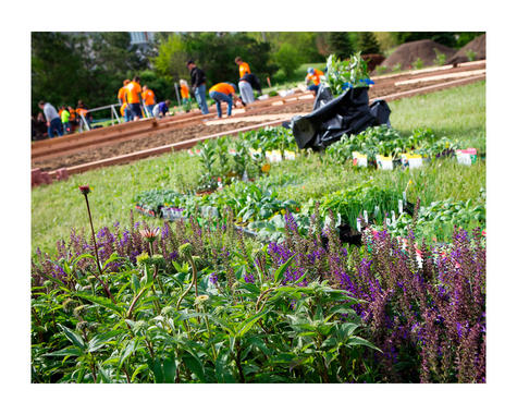 Grants Available To Community Garden Groups Civic