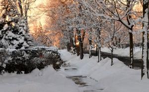 snowy sidewalk in Amherst NY