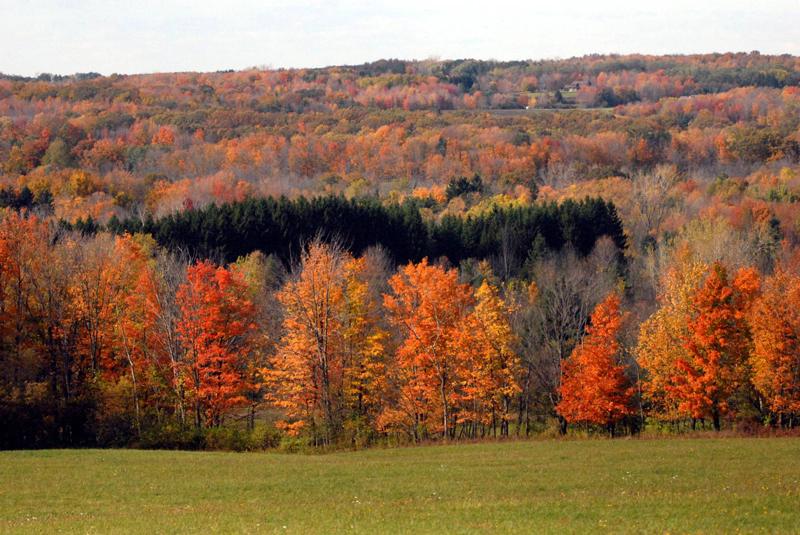 fall foliage at Mill Road in Aurora NY