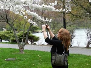 taking photo of cherry blossoms in Buffalo NY