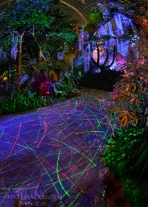 Night Lights path by Lisa Boulden