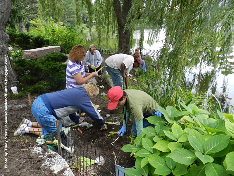 planting iris at Japanese Garden in Buffalo NY from Trudy Stern