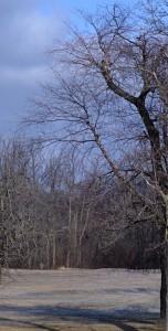 trees in South Park in Buffalo NY March 2012