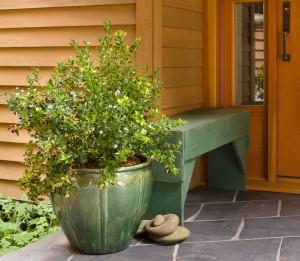 Blueberry Glaze in pot from Fall Creek Farm and Nursery, Inc.