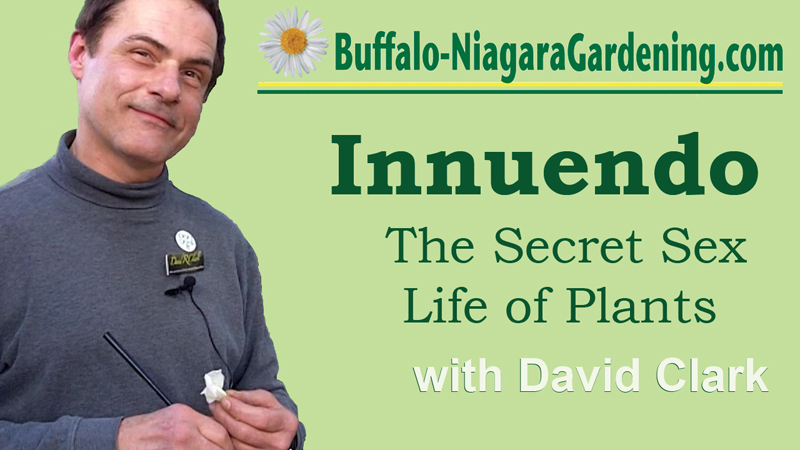 Get a sneak peek of 'Innuendo: The Secret Sex Life of Plants,' then see it live!