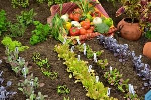 raised garden from pallets in Hamburg NY