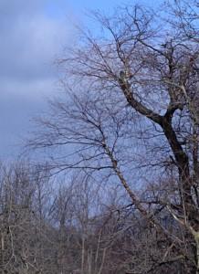 trees March 2012 in South Park in Buffalo NY