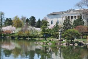 Cherry blossom garden view in Buffalo NY from Paula Hinz