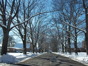 Oaks in winter on West 3rd St from City of Jamestown NY