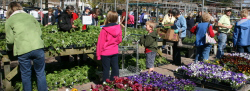 Perennial sale at Mischler's in Williamsville NY