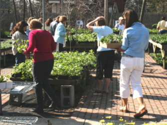 Shoppers at Mischler's perennial plant sale