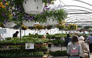 gardeners at Mischler's perennial sale Williamsville