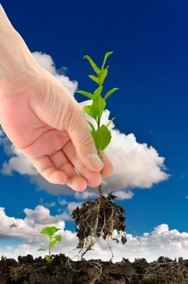 green seedling in hand