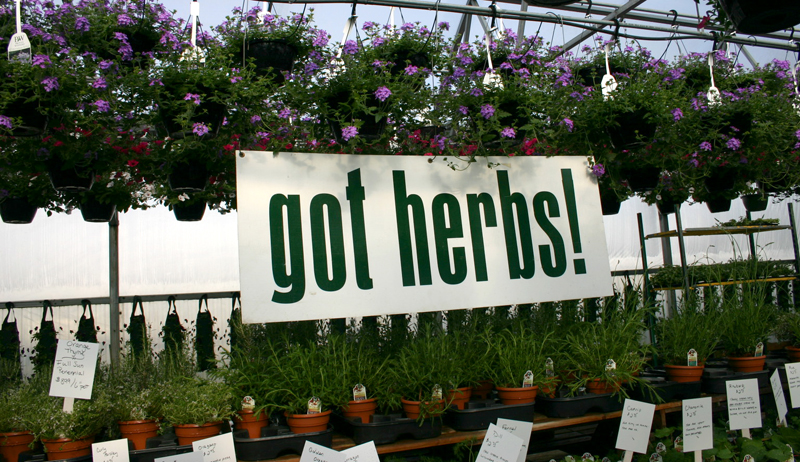 herb sign and accent plants at Mike Weber Greenhouses