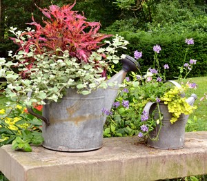 watering can planters in Lewiston 2