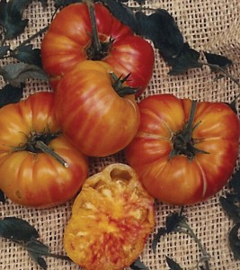 Tomato Old German courtesy Terra Organic