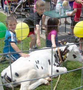 calf courtesy WNY Dairy Agricultural Festival