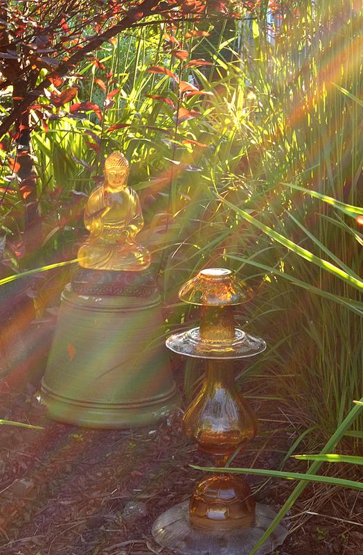 Asian garden in Williamsville NY