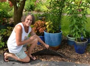 Elaine Clutterbuck showing no-dig garden in Buffalo NY