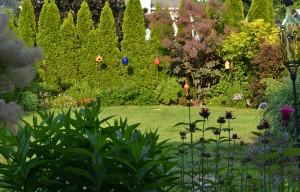 arborvitae backdrop to garden in Williamsville NY