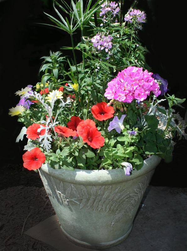 container planting from Mischler's in Williamsville NY