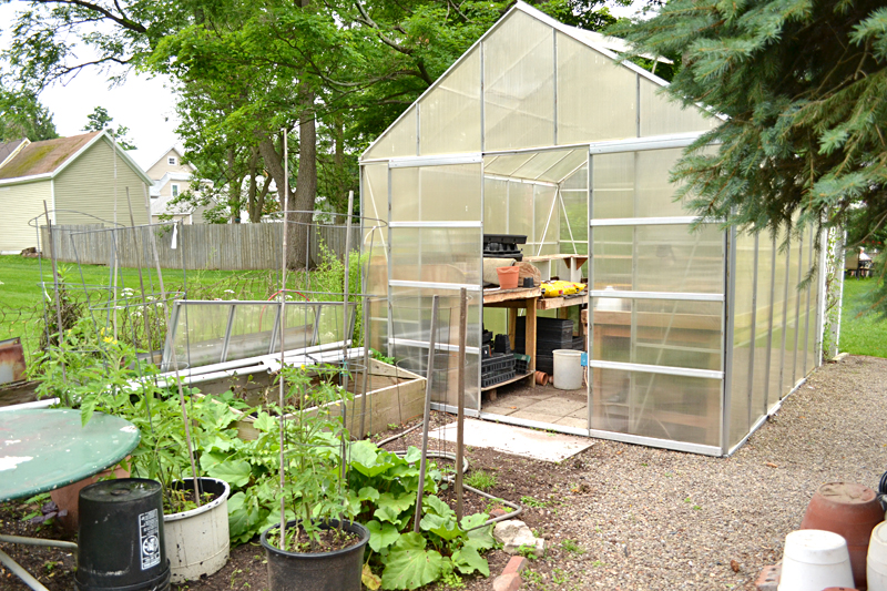 A greenhouse is tucked away behind the flower gardens in the Habermans' large backyard, and behind the greenhouse are the vegetable plants. Ken pots his tomatoes in buckets. If one plant gets a disease, it doesn't contaminate the soil in the entire bed.