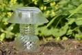 mushroom craft to make for garden in Western New York