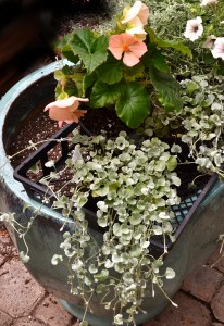 soft colors of flowers coordinate with container in Western New York