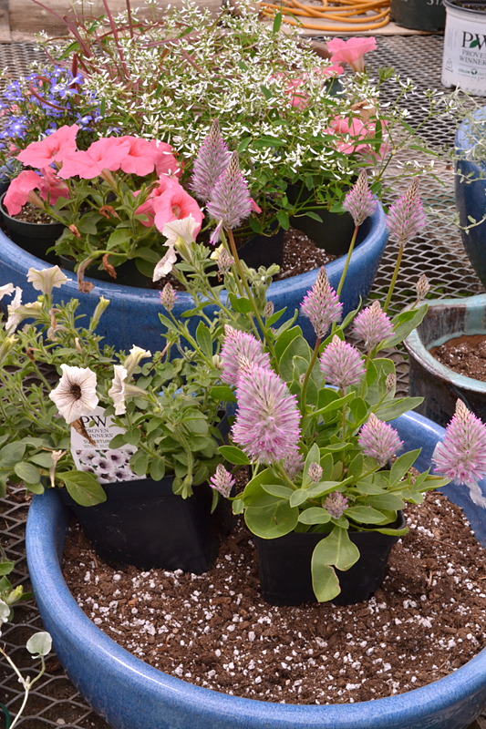 tip for planting containers from Buffalo Botanical Gardens