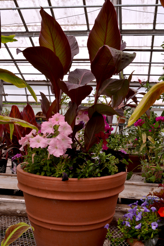tip on saving potting soil in large containers at Buffalo Botanical Gardens