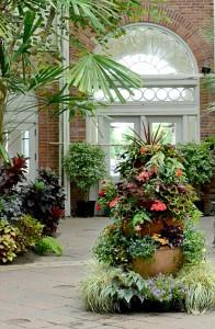 coleus showpiece at Buffalo Botanical Gardens