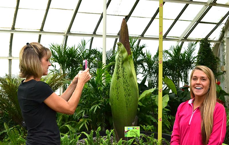 corpse flower at Buffalo Botanical Gardens