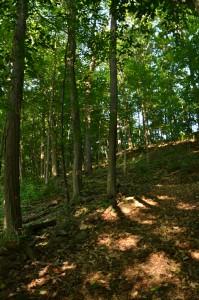 escarpment is backdrop for Lockport NY gardens