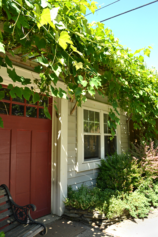 grape arbor over garage door in Buffalo NY