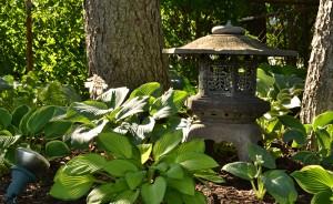 hosta garden in Amherst NY