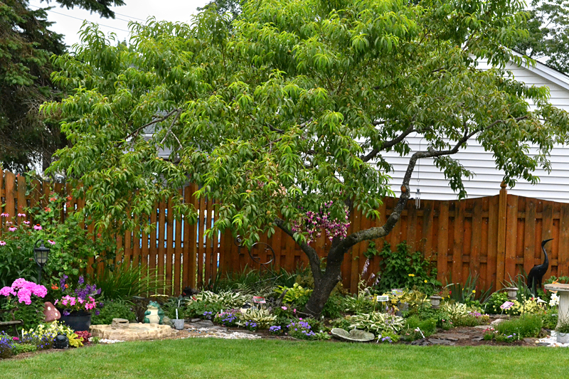 perennial garden with pear tree in Lancaster NY