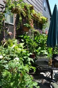planters high on wall in small backyard in Buffalo NY