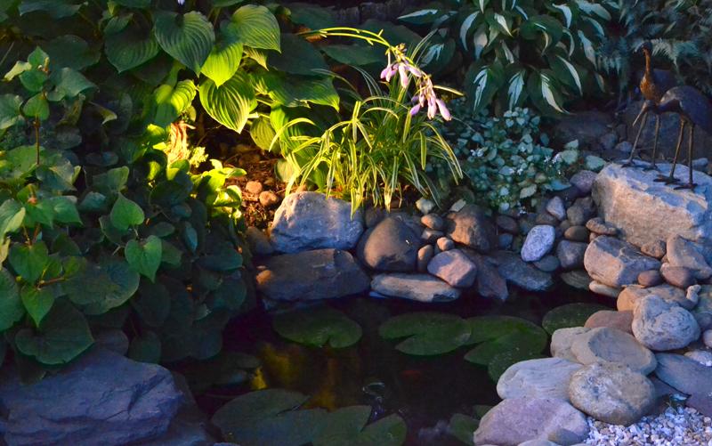 pond at night in Tonawanda NY