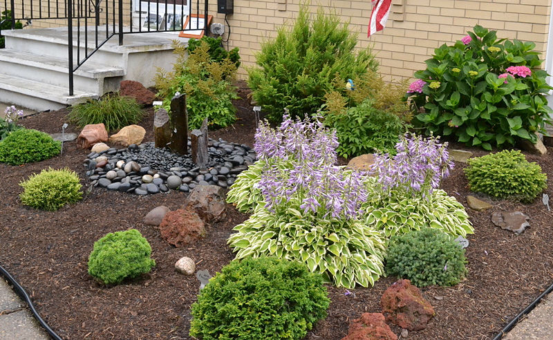 Slow-growing shrubs create low-maintenance garden; backyard is full of perennials