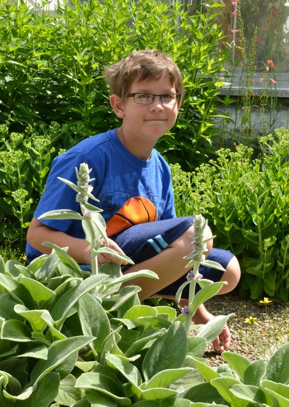 fuzzy textured plant in outdoor children's garden in Buffalo Botanical Gardens