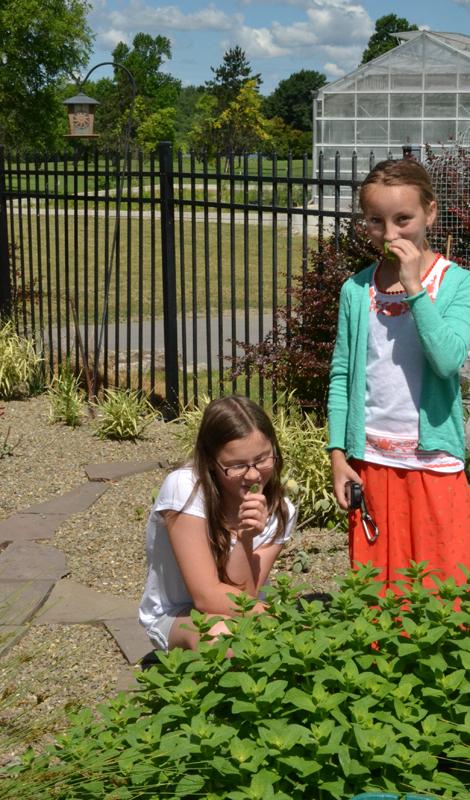 kids smell mint at Buffalo Botanical Gardens outdoor Children's Garden