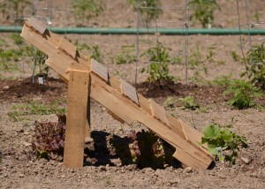 trellis made from pallet in Lockwood's community garden in Hamburg NY