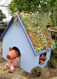 dog house at succulent show in 2011 at Buffalo Botanical Gardens