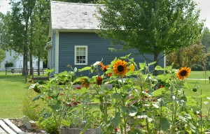 dyer's garden at Buffalo Niagara Heritage Village