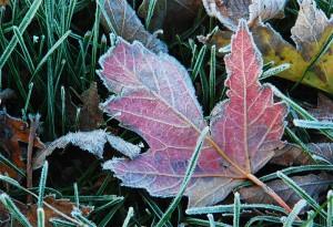 frostfog courtesy Donna Brok Garden Walk Garden Talk